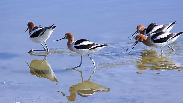 BIRD VIEWING PRESERVE & MYSTICAL FOREST