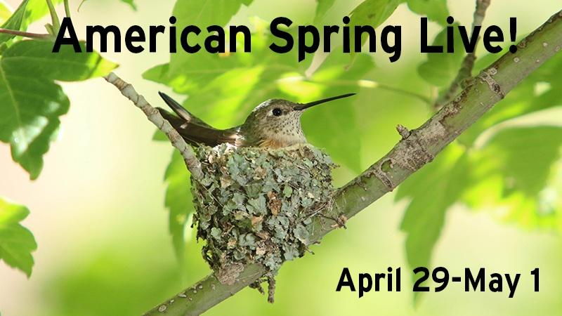 Watch American Spring Live! April 29 - May 1
