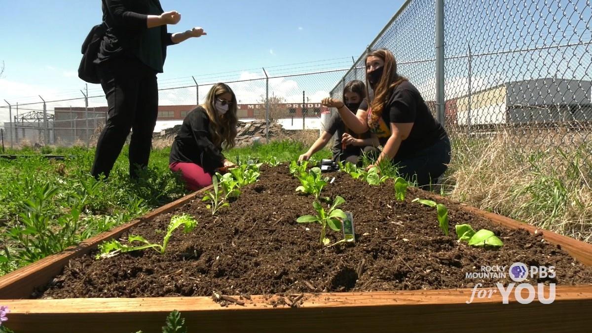 Participants in Denver's Huerta Urbana program cultivate fresh vegetables