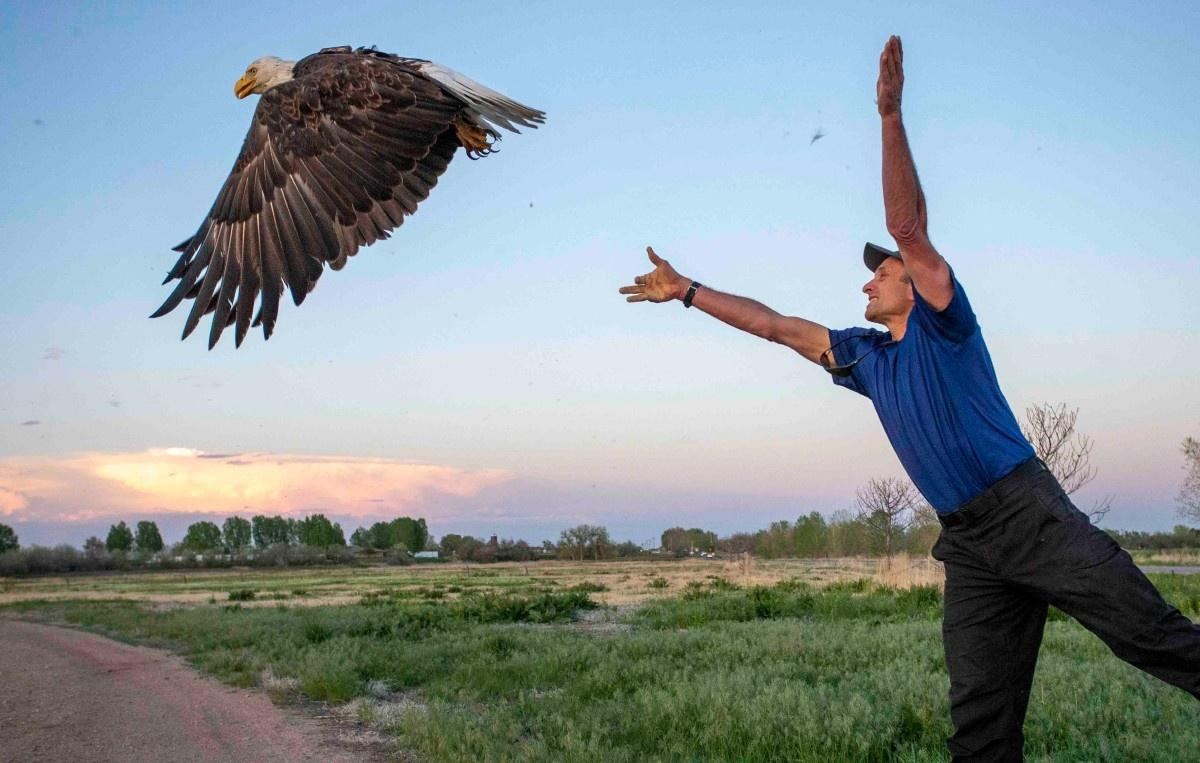 A researcher releases a bald eagle with GPS tracking as part of CPW's new study on eagle populations in Colorado's Front Range