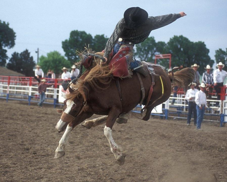 Busting a wold bronc at the Miles City BHS