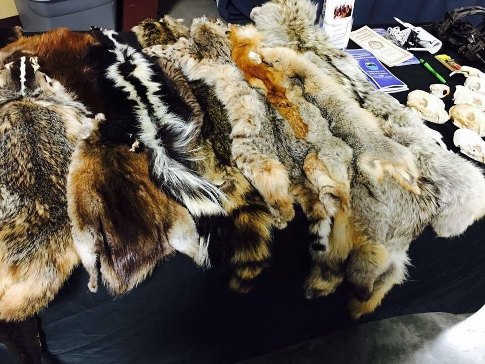 furs Bitterroot Stockgrowers Ag Expo