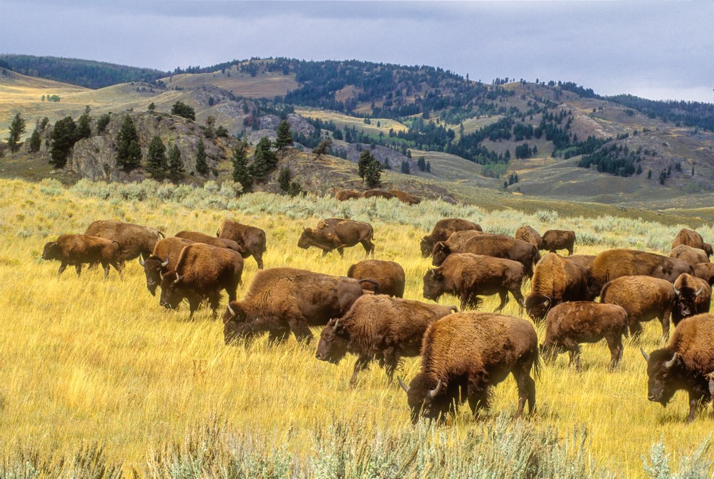 Yellowstone in Four Seasons