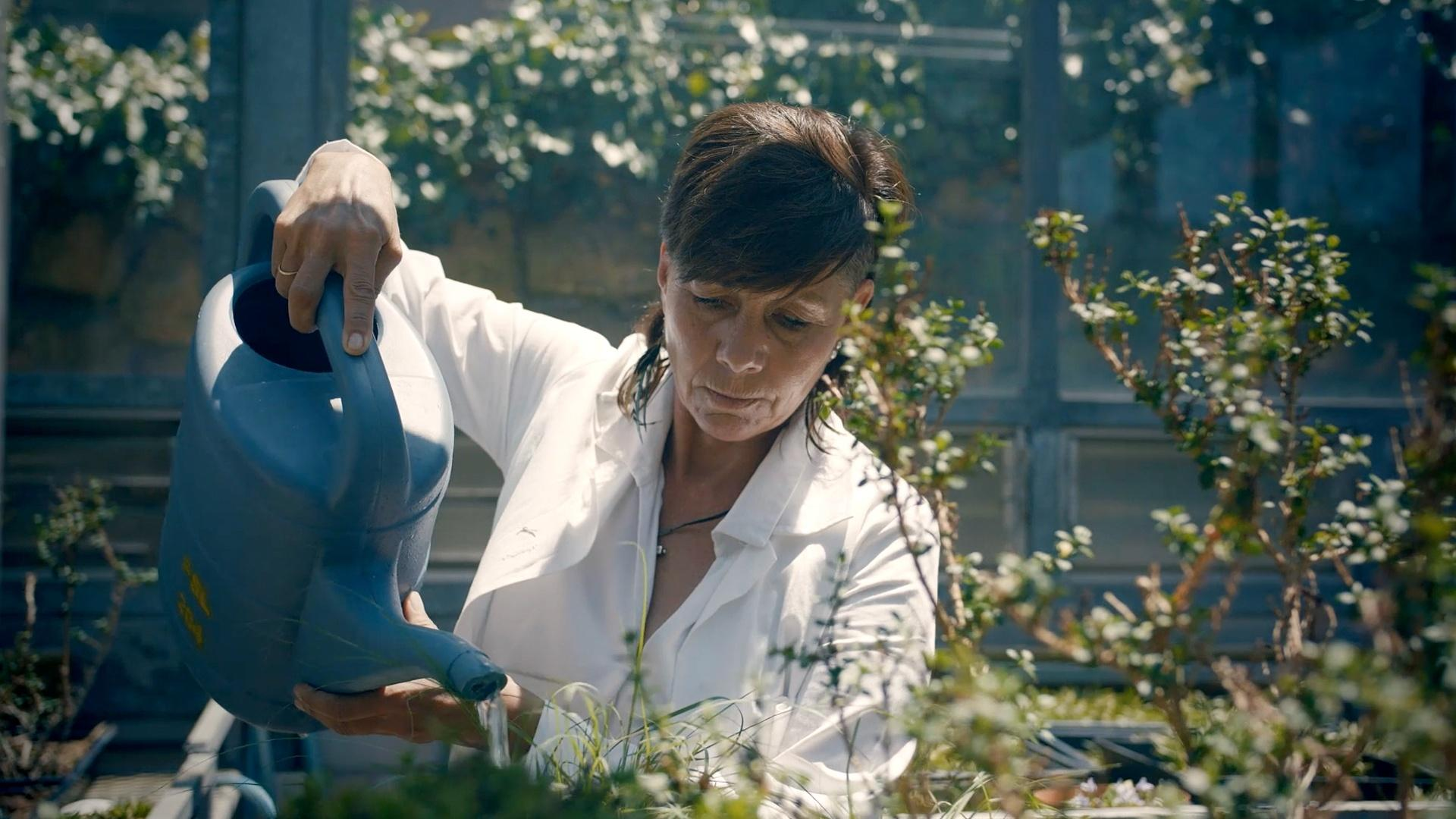 Plant Scientist Jill Farrant tending to the plants in her greenhouse in South Africa.