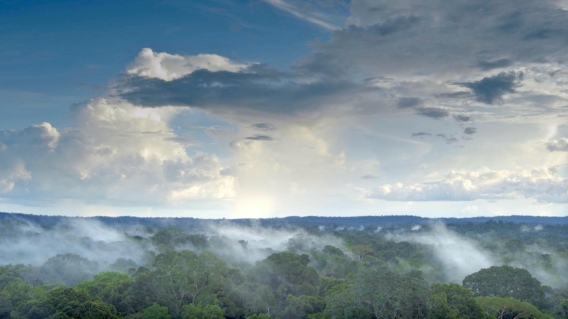 In the Amazon rainforest, 400 billion trees pump a staggering 20 billions of water each day into the sky, creating 'rivers in the sky'.