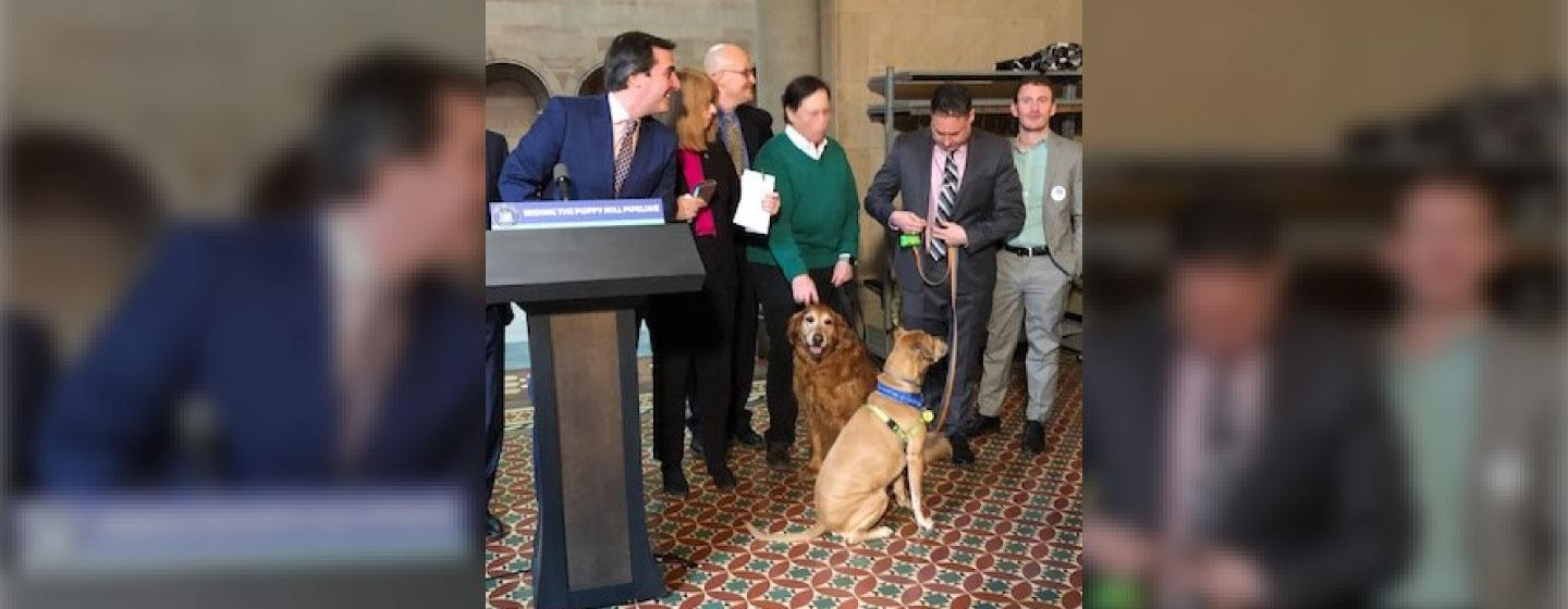 Senate Deputy Majority Leader Mike Gianaris , sponsor of the bill to ban some pet store sales, at news conference with rescue dogs Kerouac and Watson.