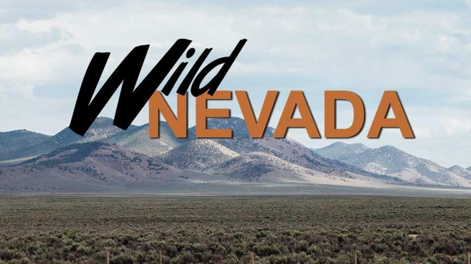 Wild Nevada