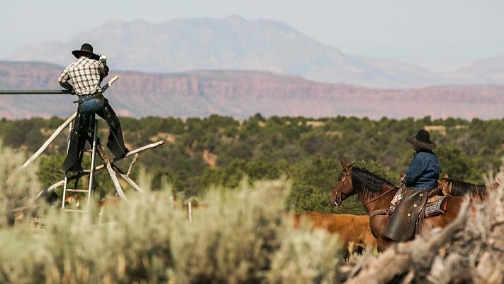 Catt grazing at Johnson Ranch [KUED]