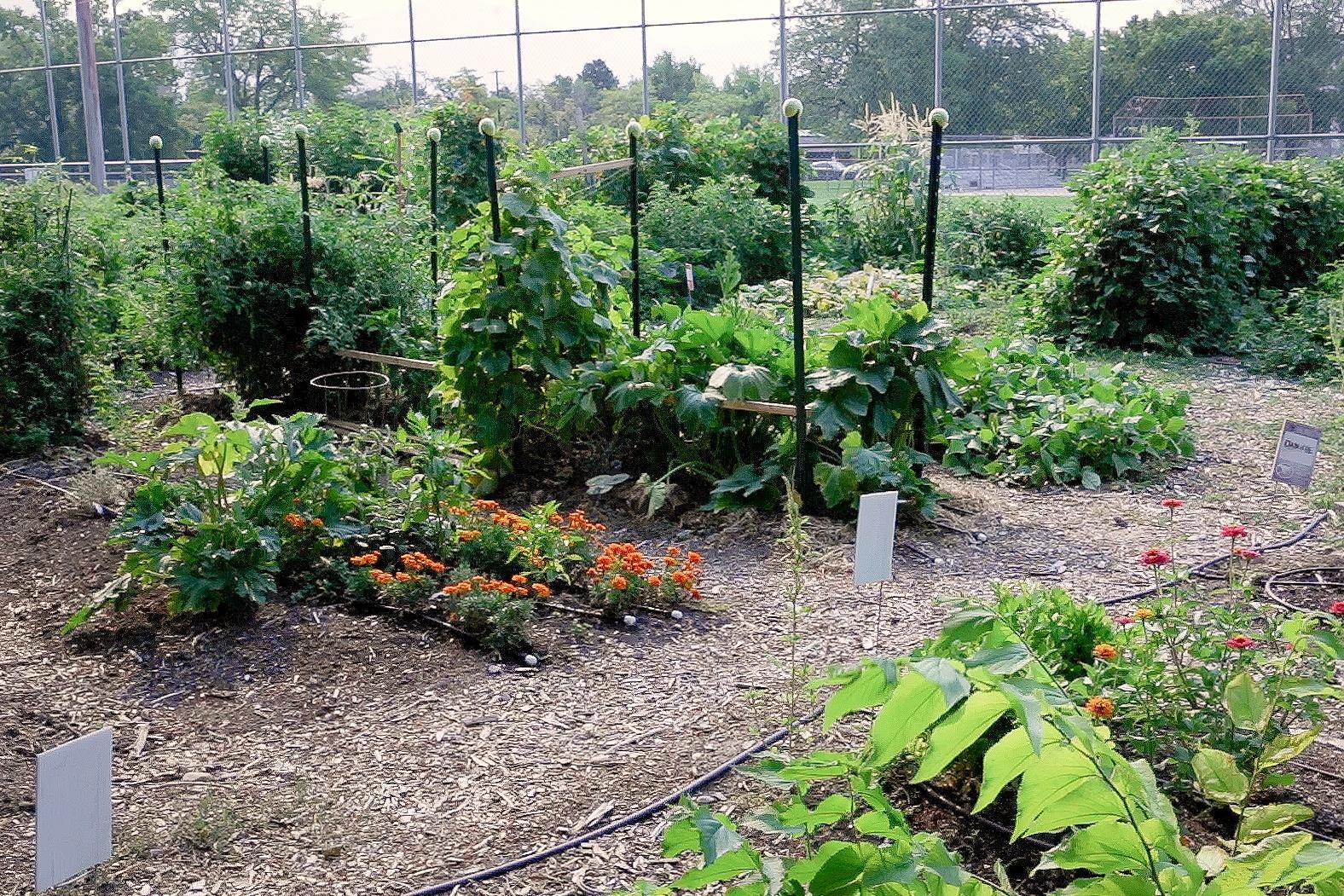 New Roots' Harmony Garden