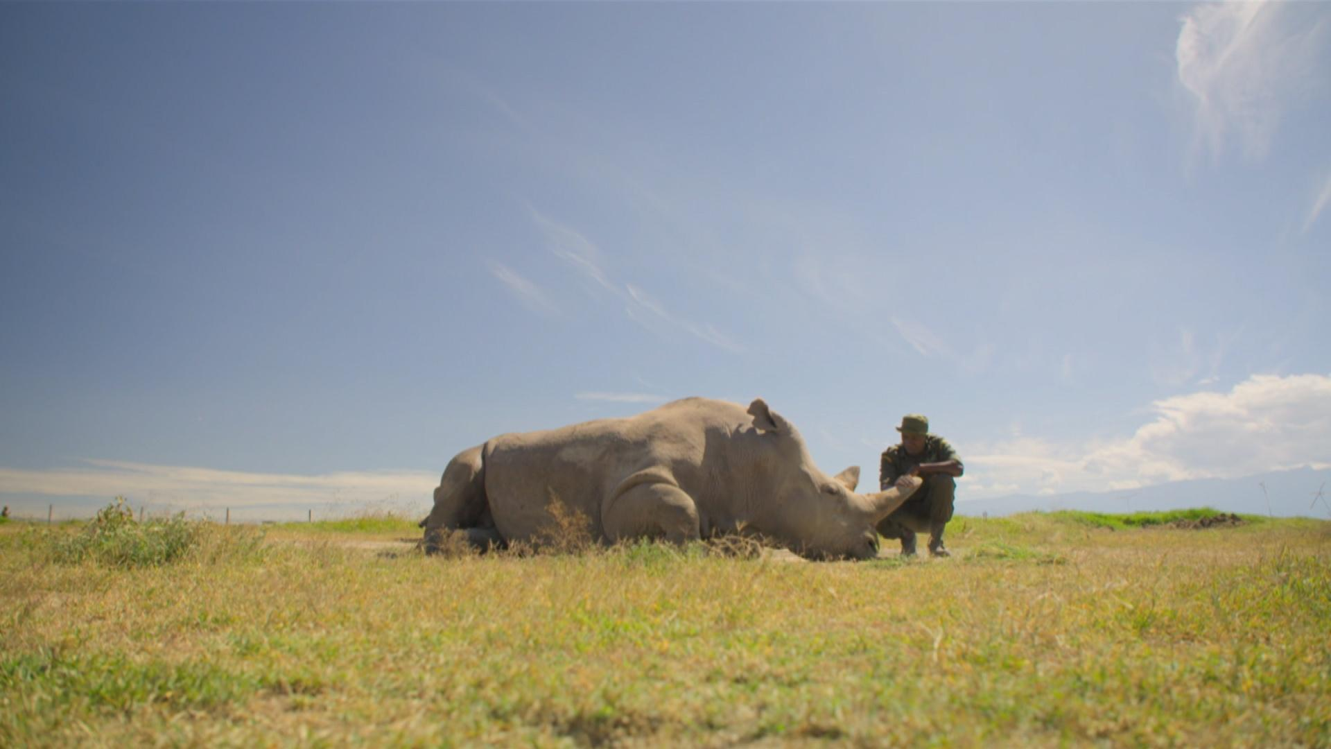 Extinction Program image