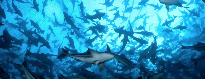 Changing Seas Season 9 Premiere
