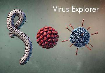 Virus Explorer