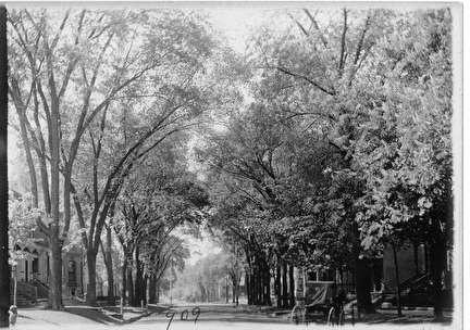 Photo of Tree-lined Street with Horse and Buggy