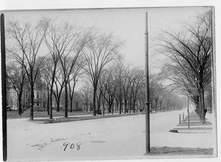 Photo of Elm Trees on Grand Avenue