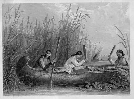Photo of Native American Rice Harvest Canoe