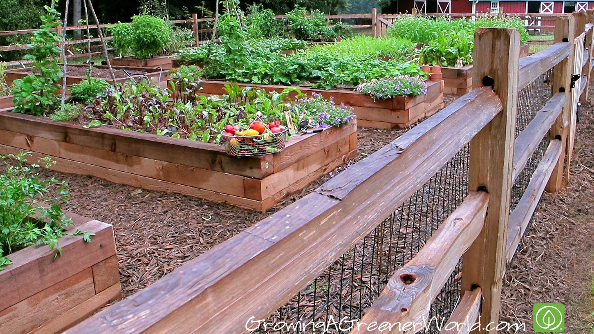 Vegetable & Fruit Gardening Articles