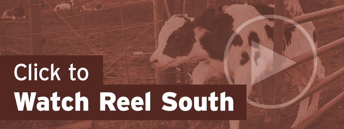 Click to Watch Reel South