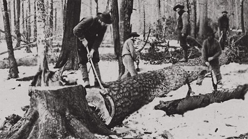 19th century lumberjacks chop up a felled tree.