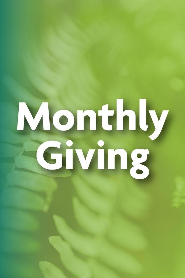 Green image with a fern in the background and the words monthly giving on top in white