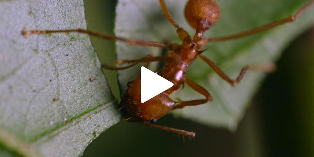 Nature Nuggets: The Ants Go Marching