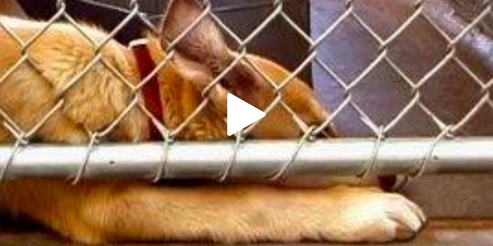 What's the Author's Purpose - Animal Shelter