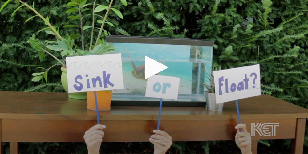 Sink or Float — Everyday Learning