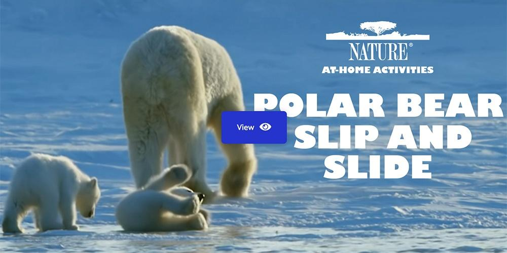 Polar Bear Slip and Slide — Nature At-Home Activities