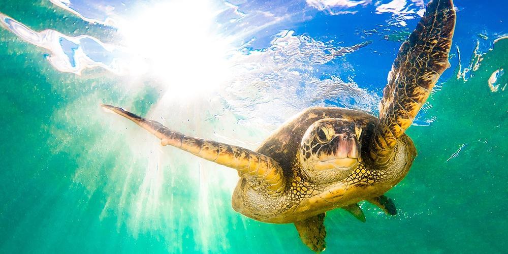 Hawaii: Islands of Wonder