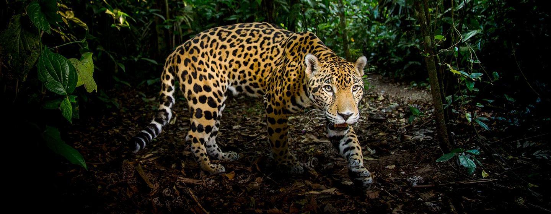 Nature, Super Cats