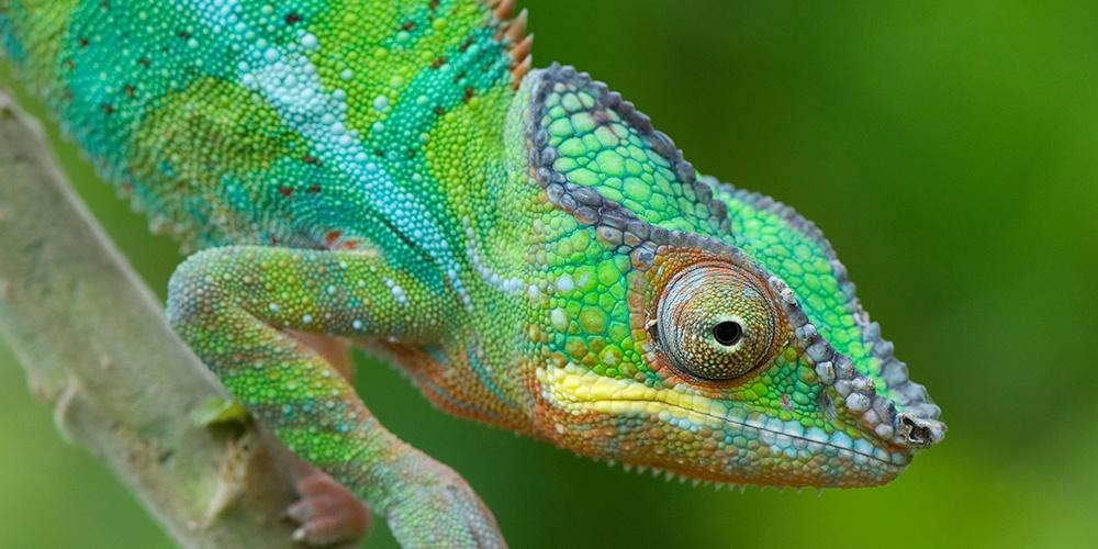 Madagascar: Islands of Wonder