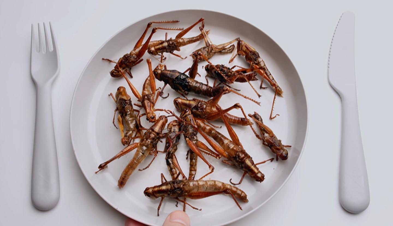 Nova, Edible Insects