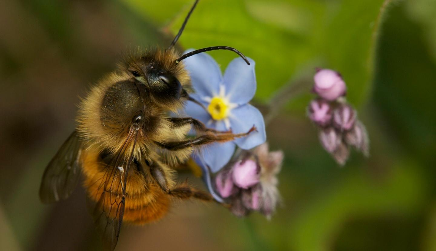 Nature, My Garden of a Thousand Bees