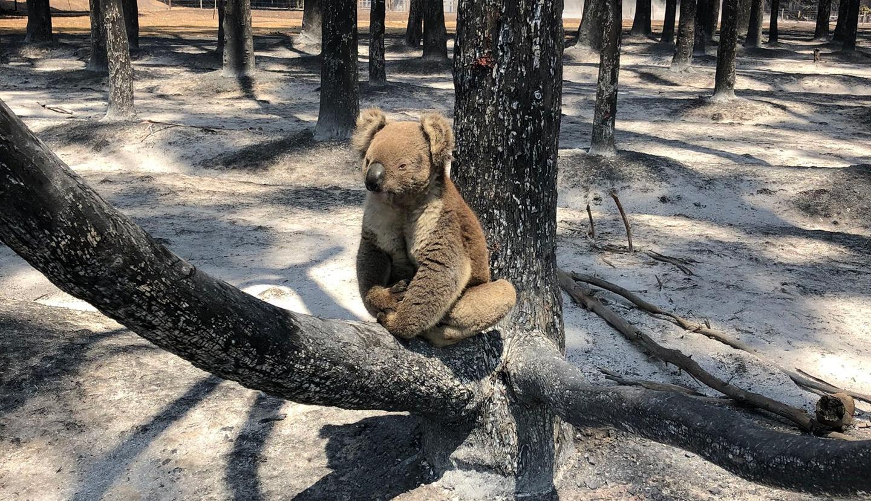 Nature, Australian Bushfire Rescue