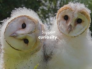 Support Curiosity
