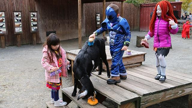 Children dressed in Halloween costumes while brushing a goat who is eating a pumpkin