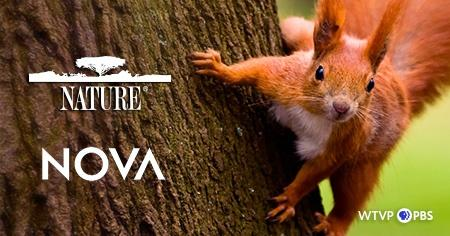 Nature & NOVA - Red Squirrel on a tree
