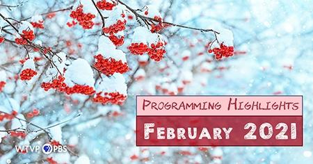 Snow covered Tree and red berries | Programming Highlights - February 2021