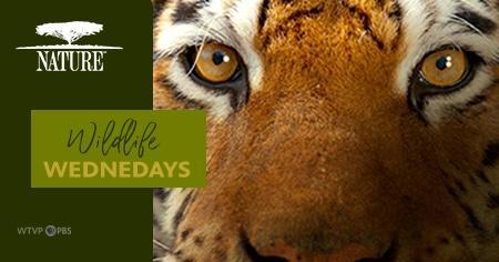 Nature: Wildlife Wednesdays