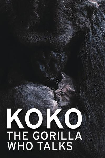 Koko – The Gorilla Who Talks