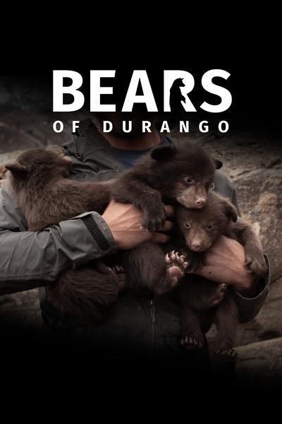 Bears of Durango