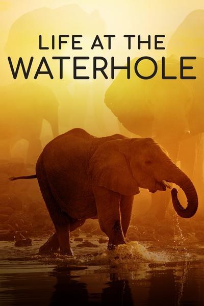 Life at the Waterhole