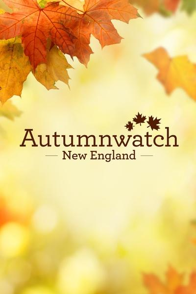 Autumnwatch New England
