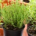 Add Healthy Herbs to Your Garden