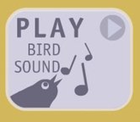 Bird Call Quiz | Exploratorium