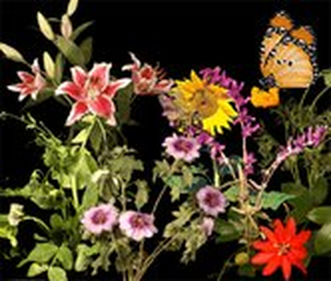 Secret Lives of FlowersSecret Lives of Flowers | Exploratorium