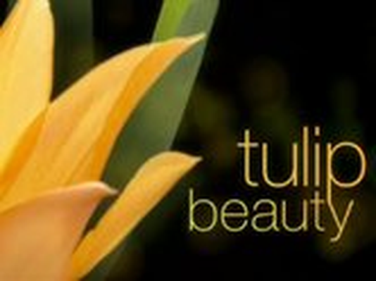 Beauty of the Tulip
