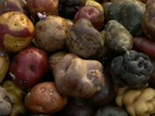 The Botany of Desire | The Potato