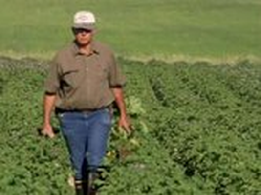 The Botany of Desire | Organic Farming of Potatoes