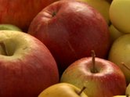 The Botany of Desire | Apples in the Wild