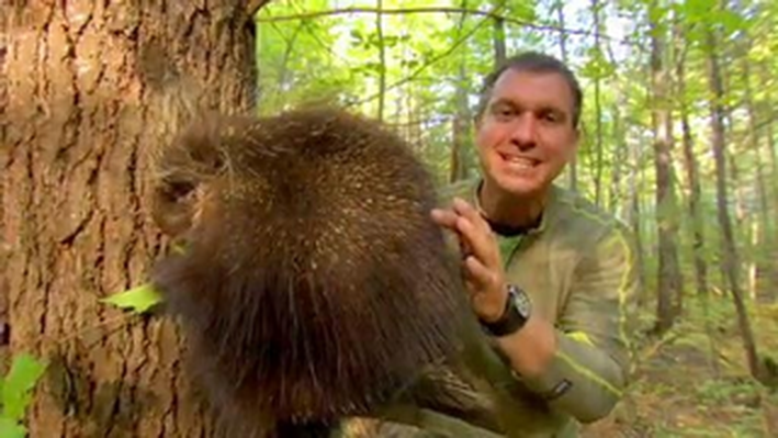 The Porcupine's Quills - Clips | Wild Kratts